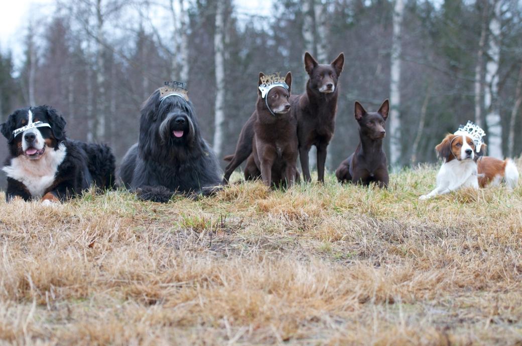 Blaze og Talli med venner :)