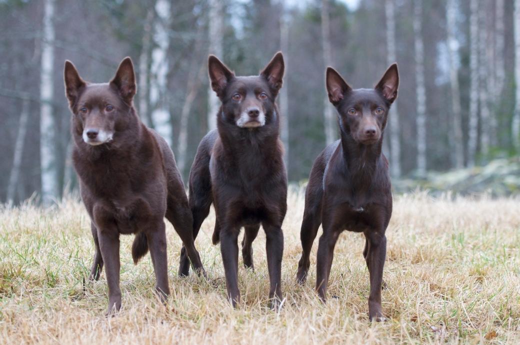Blaze, Talli og Dany. 3 generasjoner på ett brett :)